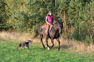 Horse riding together with your dog • Hundeschule Große Freiheit