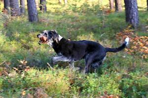 Impressum • Hundeschule Grosse Freiheit