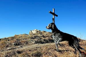 Philosophy • Hundeschule Große Freiheit