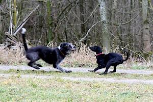 Luna und Matti