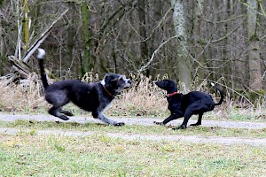 Dog rights • Hundeschule Grosse Freiheit