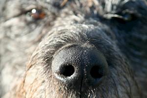 Tracking work, scent games etc. • Hundeschule Große Freiheit