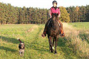Nach Abschluss des CANIS Studiums erhielt ich die Zertifizierung zum Hundetrainer von der Tierärztekammer Schleswig Holstein.