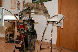 Hundeerziehung in Nürnberg: Hundeschule Grosse Freiheit