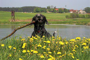Apportieren / Dummytraining • Hundeschule Grosse Freiheit