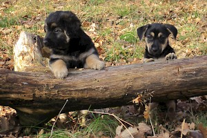 Puppy training • Hundeschule Große Freiheit