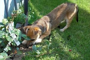 Junghundegruppe • Hundeschule Große Freiheit