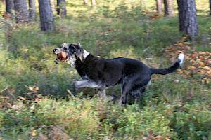 In dieser Gruppe mit maximal 6 Mensch-Hund-Teams erwartet Euch die bunte Mischung aus den vielfältigen Möglichkeiten der Hundebeschäftigung, z.B.  Apportieren Spaß …
